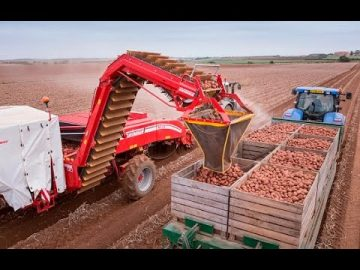 Intelligent Technology Smart Farming, Modern Agriculture Technology - Processing Potatoes